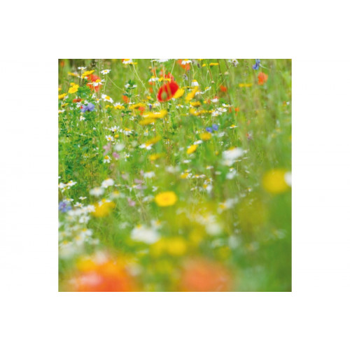 Wild Flower Seed- Old English Country Meadow Legacy Mix 1 Kg Product Image- Landscape Supply Company